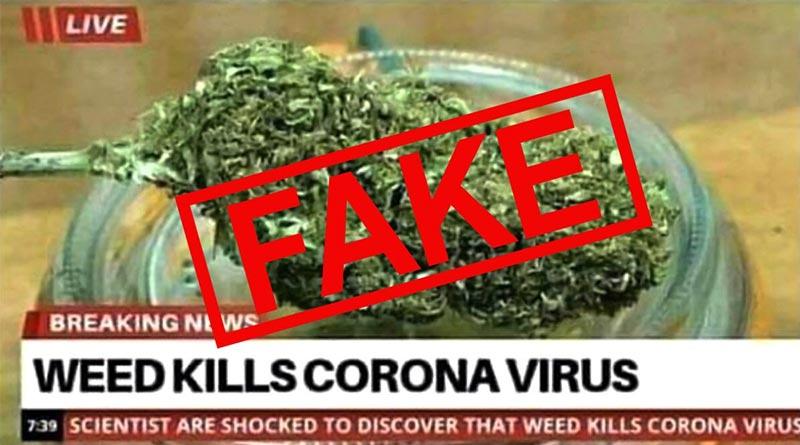 Coronavirus | Les prix du cannabis s'envolent
